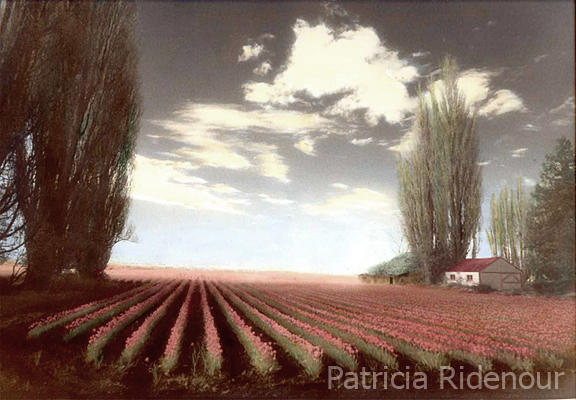 Patricia Ridenour_Washington State Arts Commission_Skagit Valley Tulip field
